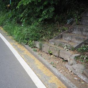 坂道にアカメガシワの花が散り/中学生ら自転車上る(富士見橋下)