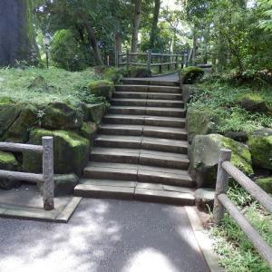 夏木立苔むす岩にセミの声/木の股に大きな茸ぽつと生え(喜多院)