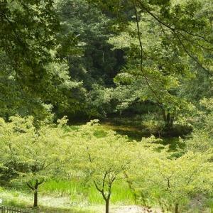 梅雨の雨集めて池に水戻り(仙波河岸史跡公園)