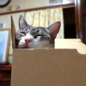 ぎゅうぎゅう箱寝
