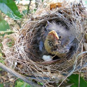 鳥の巣立ち、、、、、、、(*^_^*)