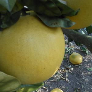 柑橘の皮、、、、、(*^_^*)