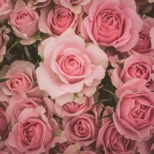 開花×リサーチシートセッション*自分を表現するストーリーを自分の言葉で!