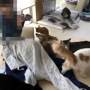犬と猫はかわいさ二乗♪