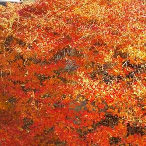 おそくてちいさい秋見つけました。