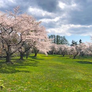 裏洞爺岩屋の桜公園