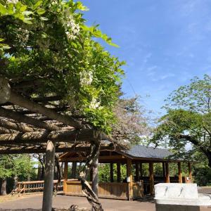 見晴公園のフジと松倉川のコヨシキリ