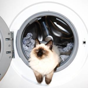 15年前の洗濯機の静音性が信じられない