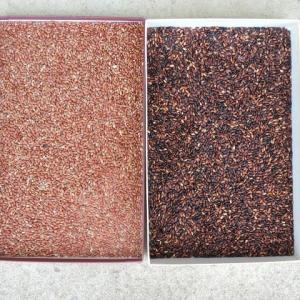 遊びの菜園-赤米・黒米