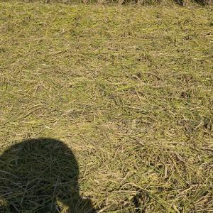 稲刈り終わって