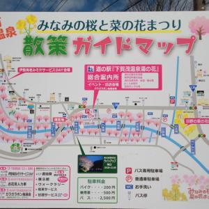 みなみの桜(河津桜 2020)