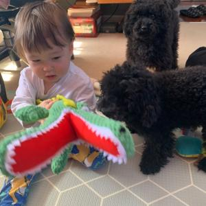 黒の仔犬ちゃん と ALDI