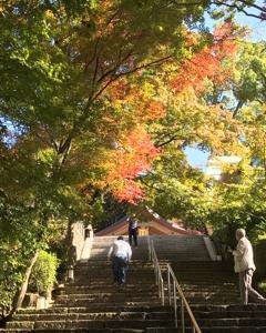 竈門神社の紅葉、   素敵でした。