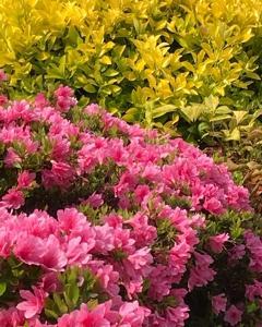 この時期、庭は、花盛り!