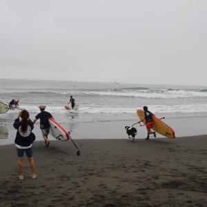 日本最大級のDOG サーフィン レースにエントリー♪^^