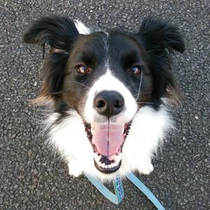 犬は人間の約7倍のスピードで老いて行く♪^^