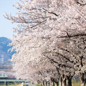 花は咲く (八高線)