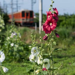梅雨の花 (東武東上線)