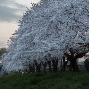 春の夕暮れ (八高線)