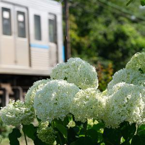 アナベル (秩父鉄道)