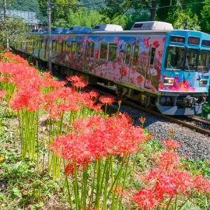 秋の花達 (秩父鉄道)
