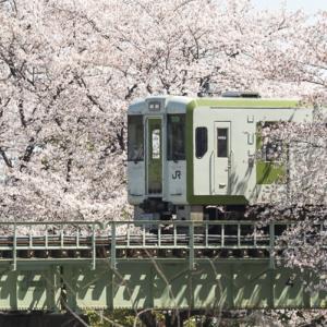 桜の舞台から (八高線)
