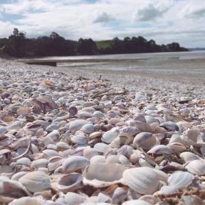 浜辺で焼き牡蠣をはふはふする!!
