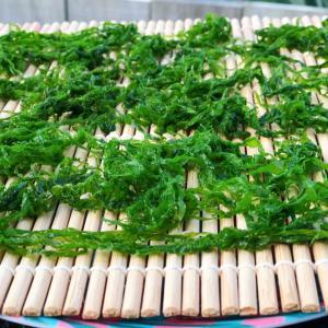 天然アオサの乾燥保存とマオリの山菜ママクのトロロ♪