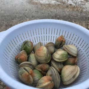 寒い冬の潮干狩り&コックル貝料理♪