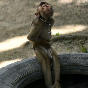 サルにココナッツを取らせる(動画) vs イルカの曲芸 どっちが問題か?