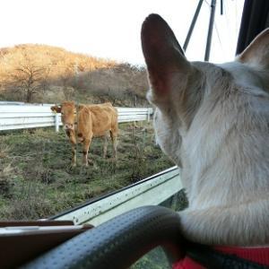 ●寒くても食べたいんだモン!おやつは『ジャージー牧場カップル』のジャージーソフトクリーム●