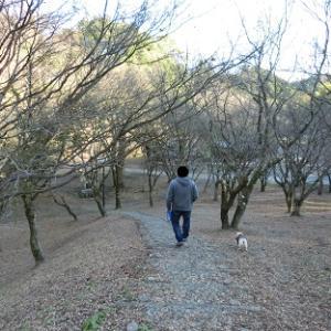●100%紅葉終えた『用作公園』で犬と散歩→久住高原で温泉→長湯温泉街の『ラーメン隼』で夜ご飯●