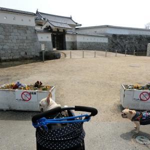 ◆赤穂浪士祀る『大石神社』を参拝したら岡山県に入って『ほり お好み焼』で日生カキオコだぜっ♪◆