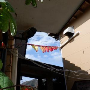 翼のような美しい花 一日中屋根を張りました
