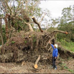 2019.9.9の台風19号から270日後のbefore・after