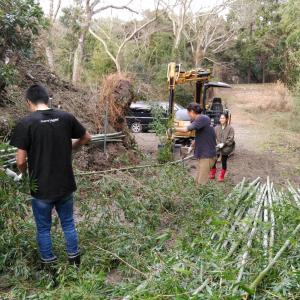 竹のガードレール イノシシから畜舎を守る