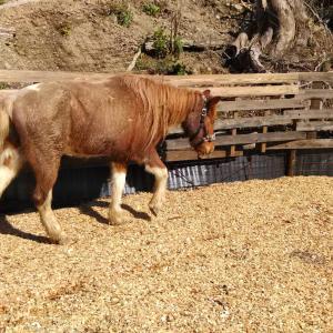 馬を『苦手や恐怖』から解放すること 表情の写真