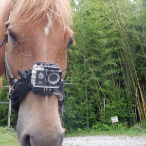 ショートムービー『馬カメラ』
