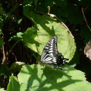 検査前診察 蝶と馬とアブの距離