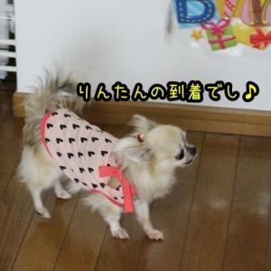 遅れたお誕生会~birthdayケーキ&お散歩編~でし♪