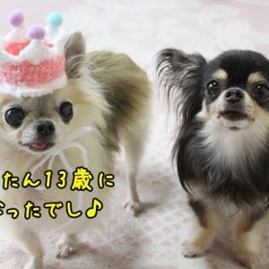 りんたん13th birthday~でし♪