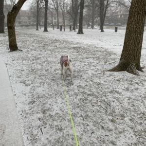 やっと雪が降ったNY