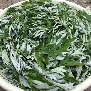 手作りヨモギ茶、始めました