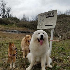 町内散歩はイノシシパトロール?