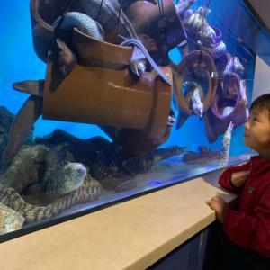 水族館のために