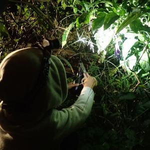 暗い中での野菜収穫と薪運び(2019年10月20日)