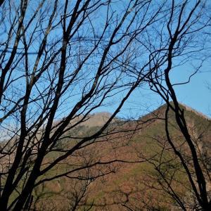 槇寄山から浅間峠まで、笹尾根を歩いてみた