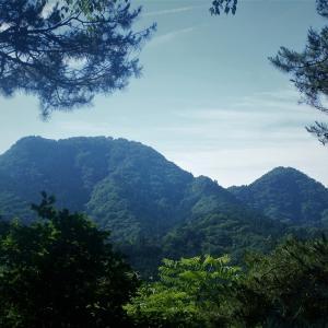 武川岳に春セミが鳴いていた