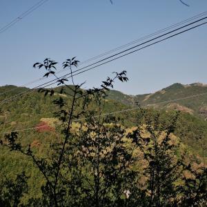 鎌北湖周辺の山々をめぐり、ツツジの様子を見てきた