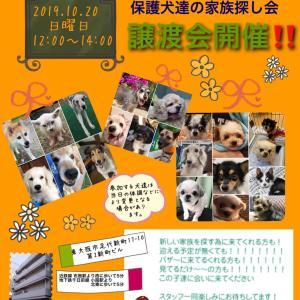 20日東大阪で譲渡会